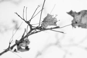 Coberto de neve, close-up de galhos secos de árvores mortas em clima frio de inverno foto