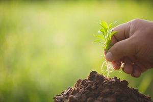 conceito de plantio e cultivo foto