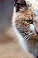 doce animal de estimação gato foto