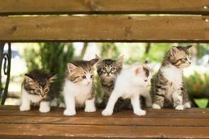 cinco gatinhos em um banco, no verão foto