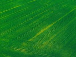 foto aérea de um lindo campo de trigo verde, conceito agrícola