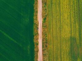 foto aérea de estrada e trigo com campo de estupro verde e amarelo