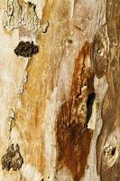 tronco de casca de árvore natural foto