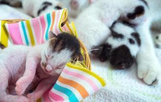 gatinho fofo e doce animal de estimação foto