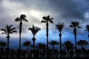 silhueta das palmeiras e as nuvens atrás foto