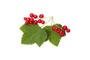 bagas isoladas. frutos de groselha vermelha isolados no fundo branco foto