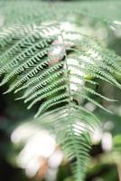 padrão de folha de samambaia na natureza foto