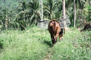 cavalo carregando cesta de metal usada para transportar safras agrícolas foto