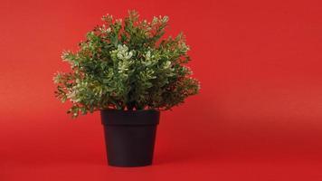 plantas artificiais ou árvore de plástico ou falsa sobre fundo vermelho. foto