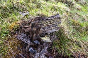 2021 05 15 tronco de árvore cortina foto