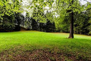 2021 05 15 cortina gramado entre as árvores foto