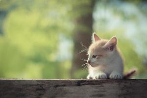 gatinho lindo fica sozinho na natureza foto