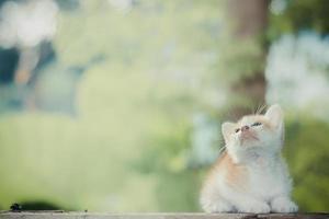gatinho sentado no chão de madeira olhando para cima foto