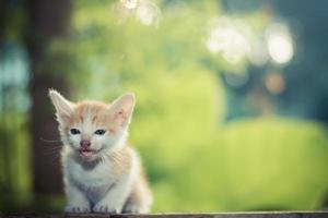 gatinho sentado no chão de madeira com o fundo da natureza foto