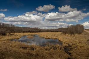 innisfail área natural. Condado de Red Deer, Alberta, Canadá foto
