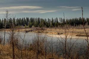 rio de veados. markerville na, red deer county, alberta, canadá foto