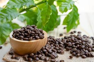 grão de café torrado médio em tigela de madeira com folhas foto