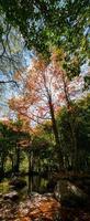 paisagem de outono com reflexo de lagoa na fazenda wuling foto