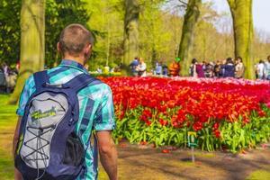 turista mochileiro está observando tulipas em keukenhof, na Holanda, 2014 foto