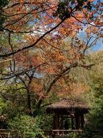 paisagem de outono na fazenda wuling foto
