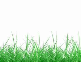grama verde isolada sobre o branco foto