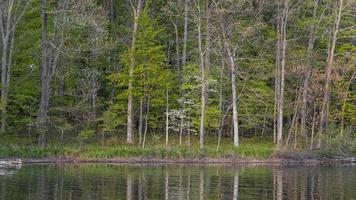 terras de madeira na zona rural de Michigan com reflexo no lago foto
