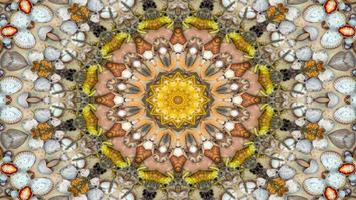 conchas secas e caleidoscópio de estrelas foto