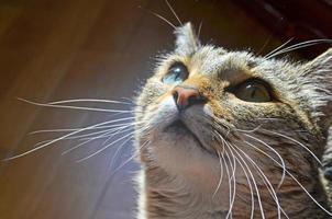 gato doméstico de perto foto
