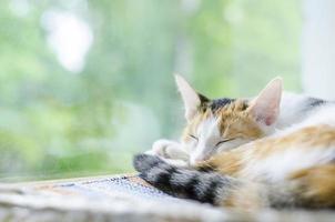 gato tricolor dormindo perto da janela foto