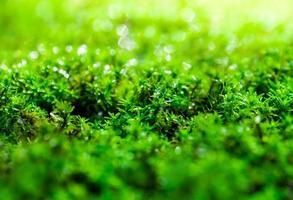 frescor musgo verde crescendo no chão com gotas de água ao sol foto