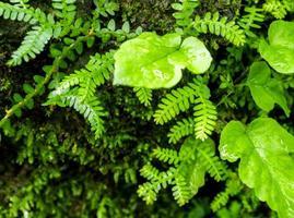 frescura pequenas folhas de samambaia com musgo e algas no jardim tropical foto