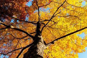 folhas e galhos amarelos no outono foto