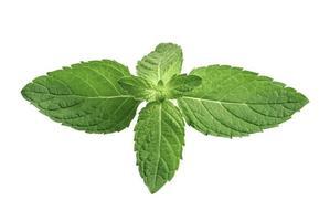 folha de hortelã, folha de hortelã-pimenta crua fresca isolada no fundo branco. foto