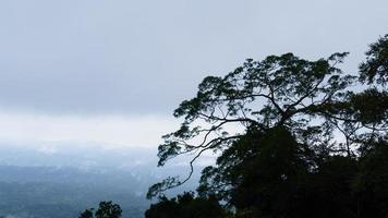 árvore tropical e névoa na montanha foto