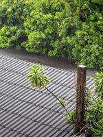 a chuva caiu no telhado de telha velha foto