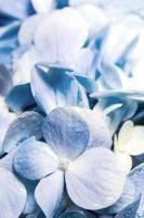 close up detalhe de frescor azul frágil buquê de flores foto