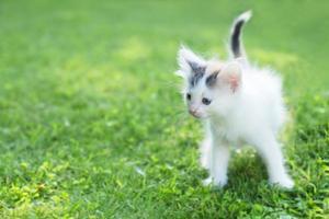 gatinho fofo na grama, no verão foto