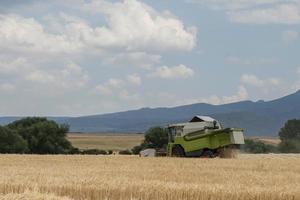 colheitadeira trabalhando em uma colheita de cereal. foto