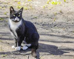 gato desabrigado preto e branco sentado. foto