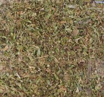 erva de orégano também conhecida como manjerona foto
