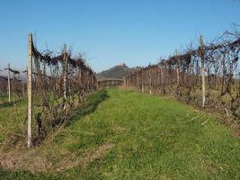 Roero Hills em Piemonte foto