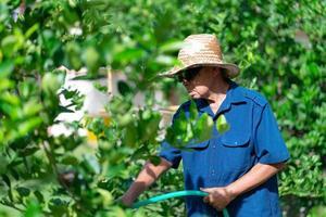 retrato de jardineiro sênior regando abundante no jardim foto