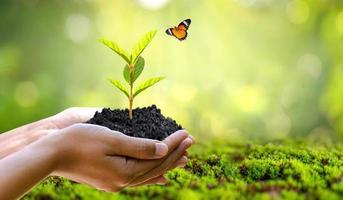 meio ambiente dia da terra nas mãos de árvores que crescem mudas foto