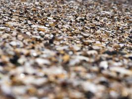 seixos, conchas e areia do mar. textura. o fundo foto
