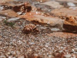 bela concha de rapan na areia da costa do mar negro foto