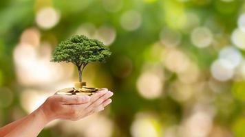 árvores são plantadas em moedas em mãos humanas com fundos naturais borrados, idéias de crescimento de plantas e investimentos ecológicos. foto