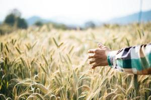 fazendeiro bonito com campo de barlay foto