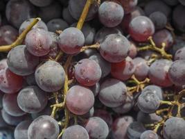 frutas de uva vermelha foto
