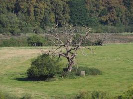 vista do campo em chepstow foto