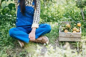mulher colhendo uma plantação de laranja foto